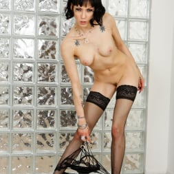 Asphyxia Noir in 'Evil Angel' Anal Required (Thumbnail 3)